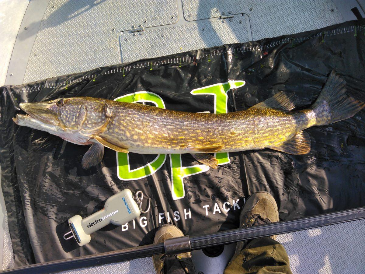 Atle Nerland melder inn 6+ fisk