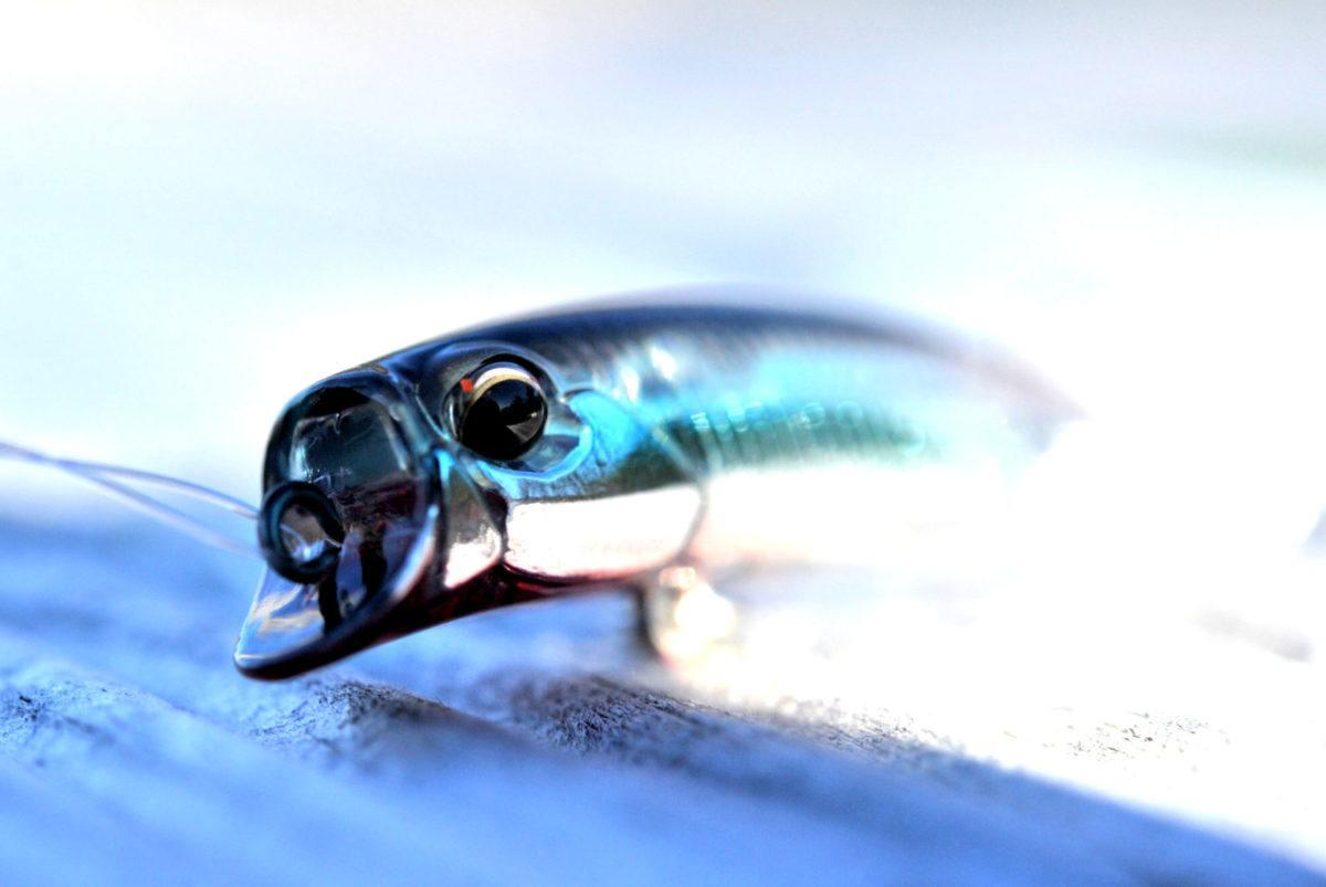 Det er som å bli født på ny. Som ny fisker på hver tur. Sjøørret fiske i slutten av oktober.