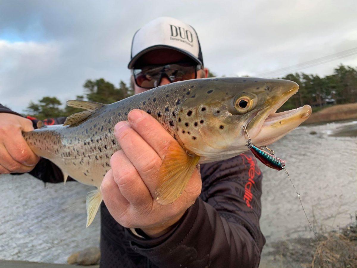 Sjøørretfiske på finesse måten. 9.nov 2019