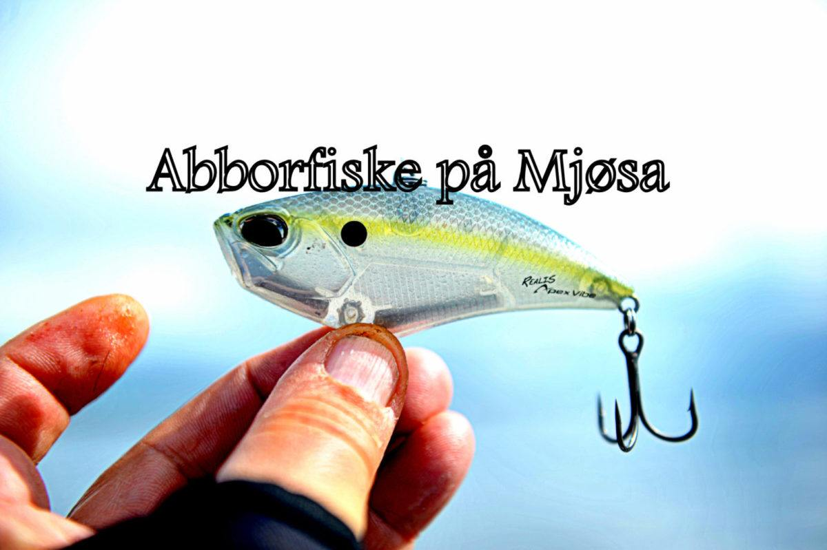 Abborfiske på Mjøsa.