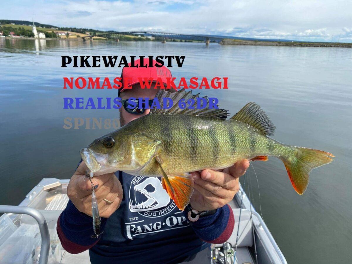 Abborfiske på Mjøsa. (video)