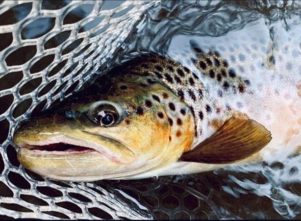 Et bilde som inneholder fisk, brun, åpen, liten  Automatisk generert beskrivelse