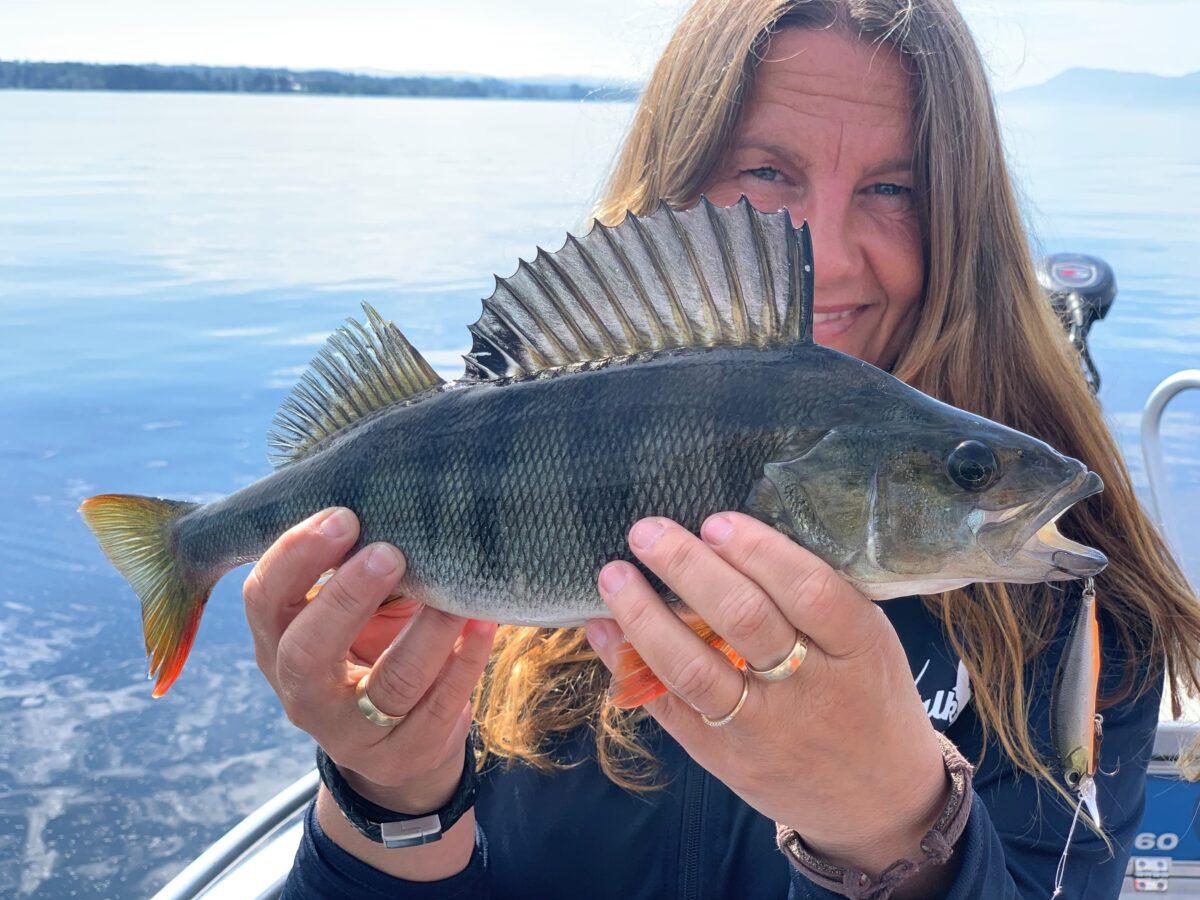 Abborfiske ligger høyt på prioriteringslista (video)