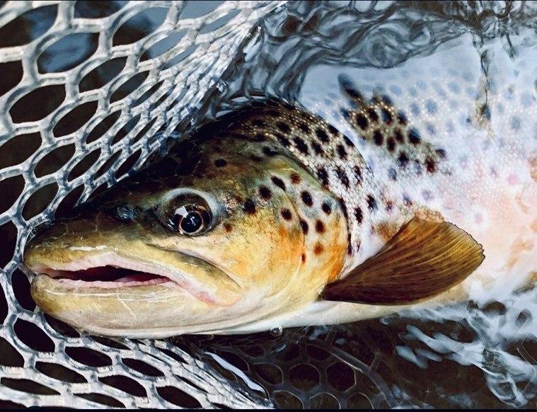 Hvordan fiske ørret i sommerlav elv.